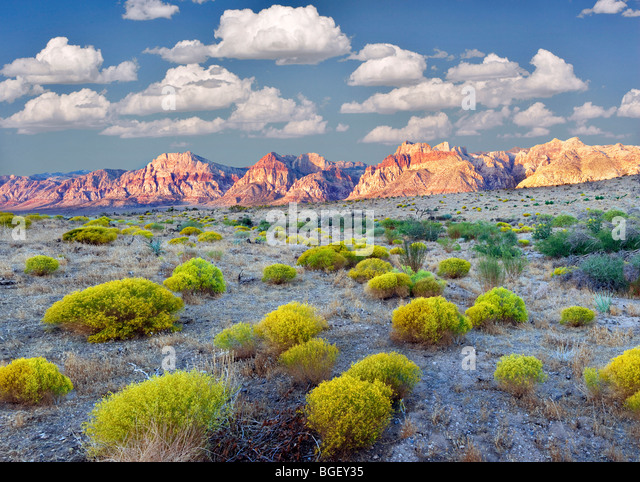 Rabbit brush and rock formations in Red Rock Canyon National Conservation Area, Nevada. Sky has been added. - Stock Image