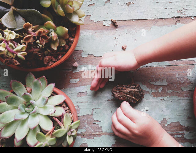 A Boy And His Toad - Stock Image