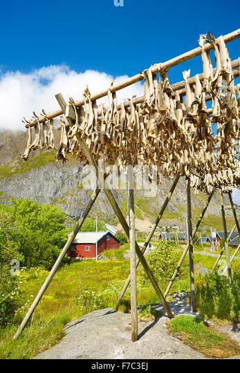 Drying stockfish, Lofoten Islands, Norway - Stock Image