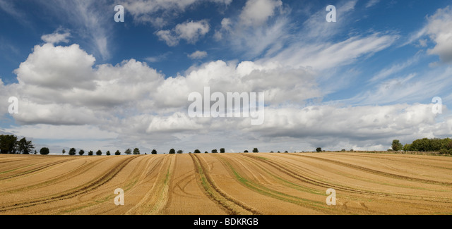 Harvested wheat field, in the English countryside. Cotswolds, Gloucestershire, England - Stock Image