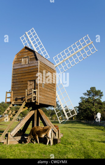 Historic windmill and cattle at Island Farm living history museum circa 1847 Manteo, Roanoke Island, North Carolina - Stock Image