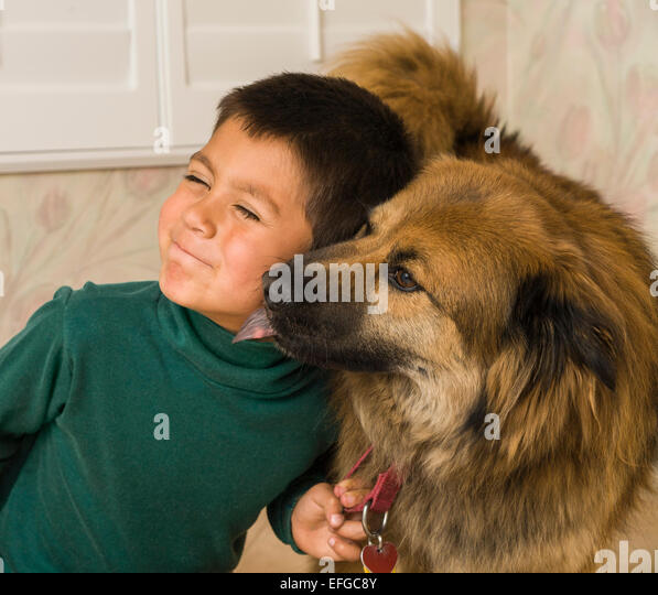 Young Mexican heritage Hispanic-Caucasian boy grimaces when his Shepherd-Chow mix dog licks his goofy face. MR © - Stock-Bilder
