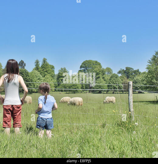 Girls (10-11) looking at grazing sheep - Stock Image