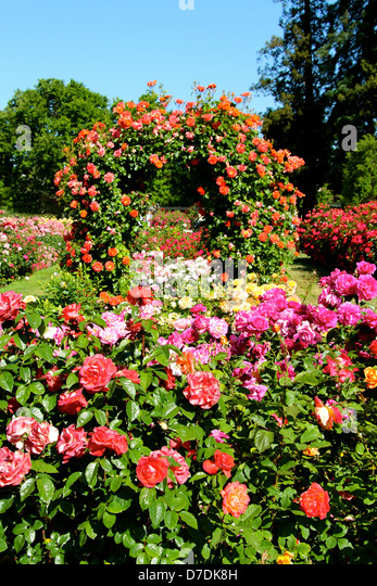 San Jose Municipal Rose Garden In San Jose, California. - Stock Image