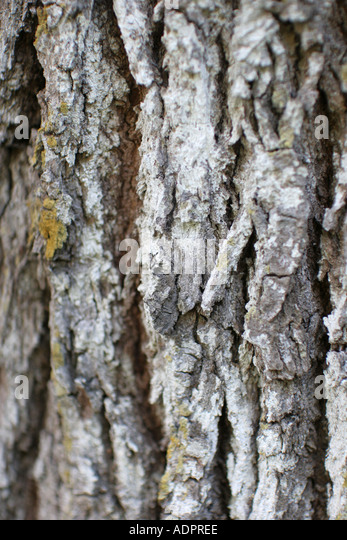 Florida, tropical flora, growing, life, tree trunk, bark, wood, protection, - Stock Image
