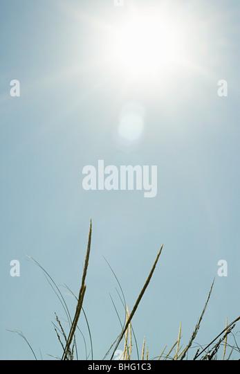 Bright sunlight over sand dunes - Stock Image