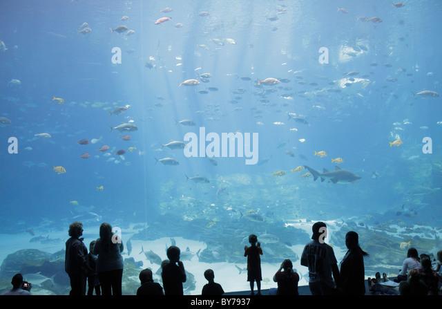 Atlanta Georgia Pemberton Place Georgia Aquarium saltwater habitat marine life fish shark world's largest tank - Stock Image