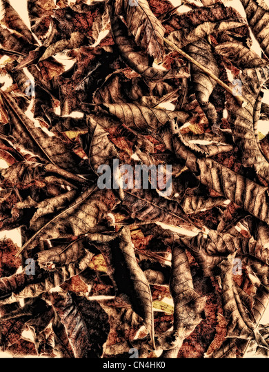 Pile of chestnut leaves - Stock Image