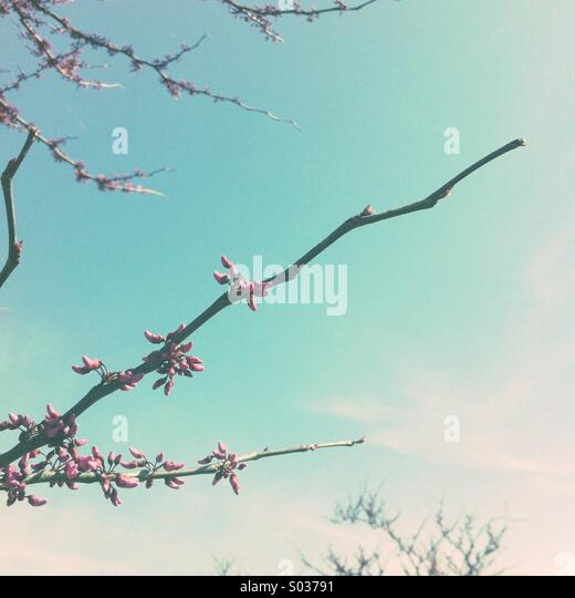spring branches - Stock Image