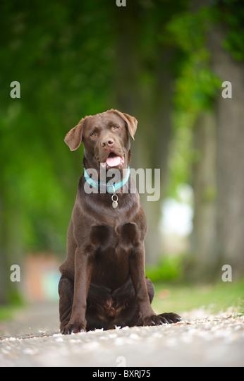 doggy - Stock Image