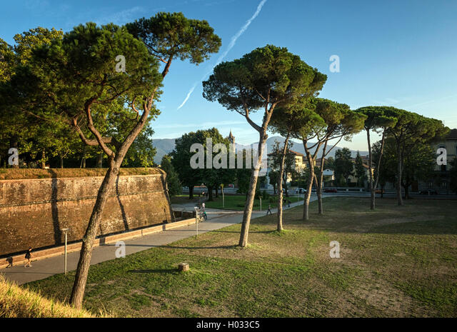 The ancient walls of Lucca, Tuscany, Italy - Stock Image