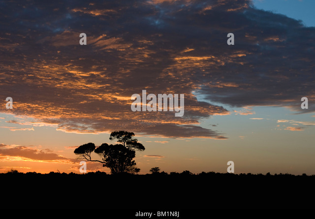 Sunrise, Masai Mara National Reserve, Kenya, East Africa, Africa - Stock Image