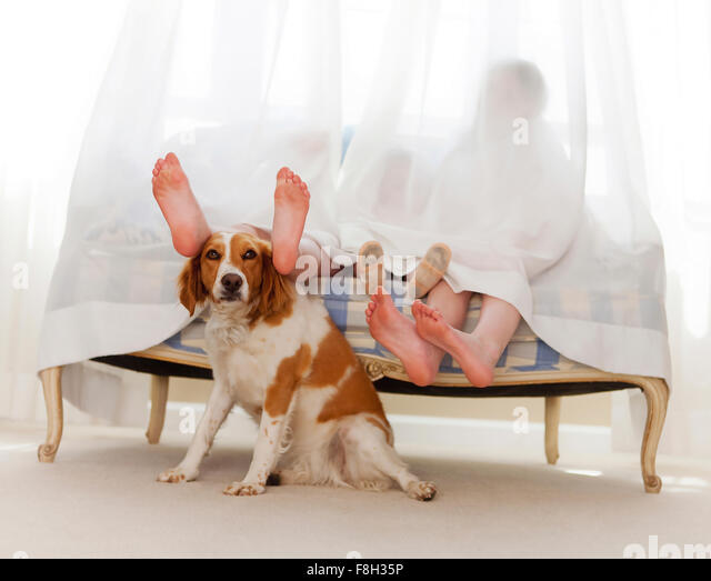 Bare feet of family behind curtain with dog - Stock Image