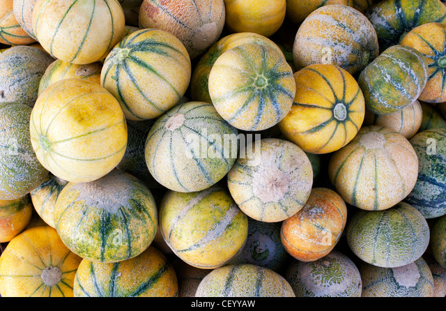 Fresh Melons for sale at an Indian market. Andhra Pradesh, India - Stock Image