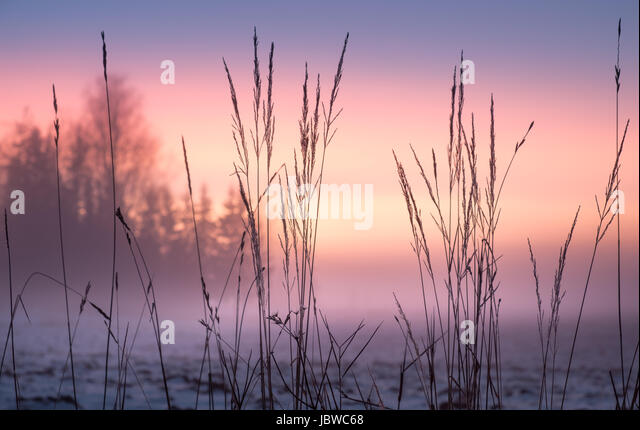 Foggy and colorful sunset with foreground grass at winter evening - Stock Image