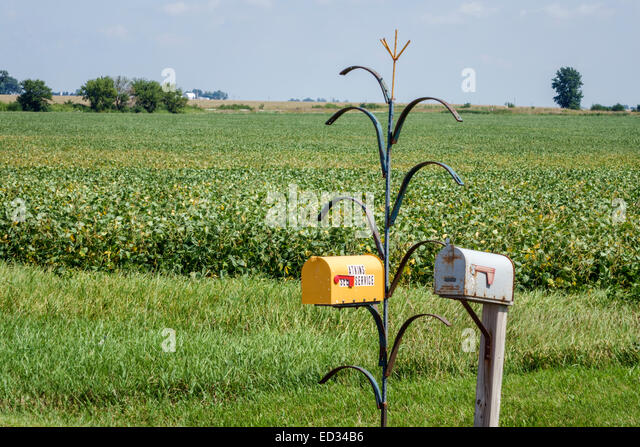 Illinois Fairbury mailbox cornstalk soybean field rural - Stock Image