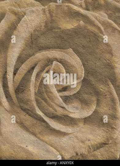 Rose in a romantic illustration - Stock Image