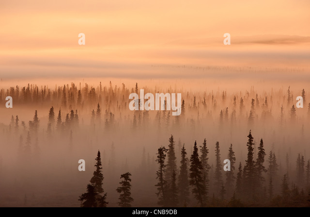 Sunrise over a foggy forest, Katmai National Park and Preserve, Southwest Alaska, Autum - Stock-Bilder
