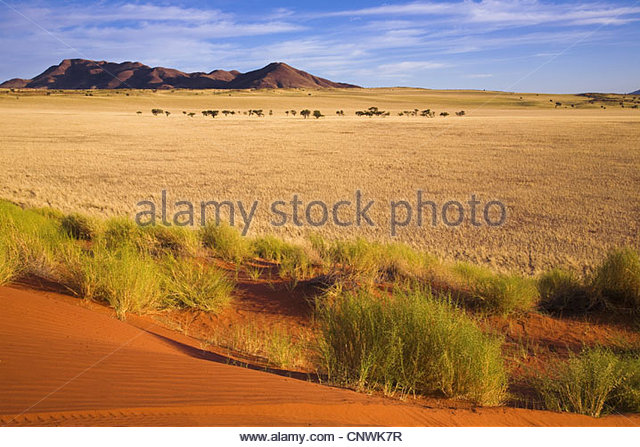 desert landscape in the morning, Namibia, Namibrand, Namib Naukluft National Park - Stock Image