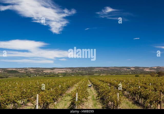 Mclaren Vale Stock Photos Amp Mclaren Vale Stock Images Alamy