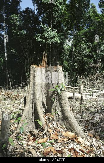 Forest Destruction - Stock Image