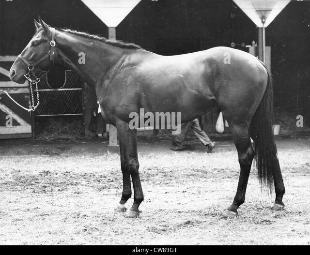 Nasuah, Hialeah Racetrack, Florida,1956 - Stock Image