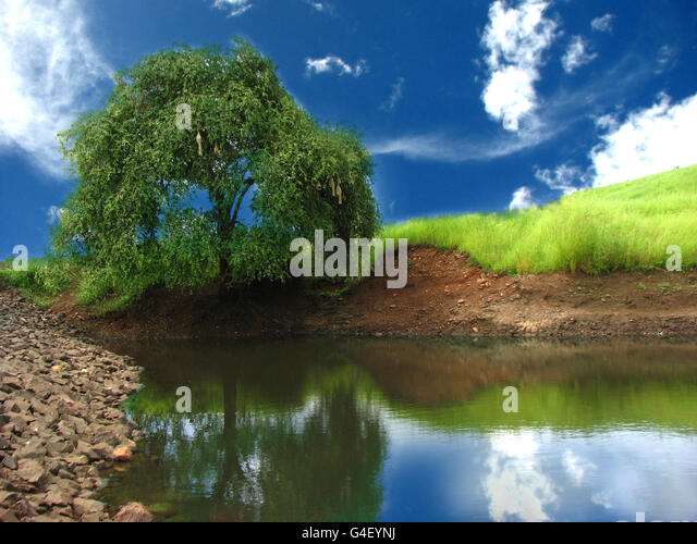 Beautiful Pond - Stock Image