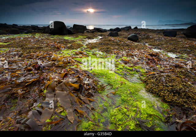 Sea grass at sunrise on the island Runde on the Atlantic west coast, Møre og Romsdal, Norway. - Stock-Bilder
