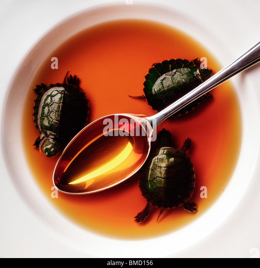 Turtle soup - Stock-Bilder