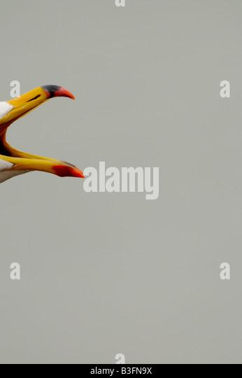Gull calling - Stock-Bilder