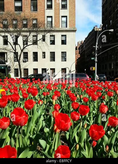 USA, New York State, New York City, Park Avenue in springtime - Stock Image