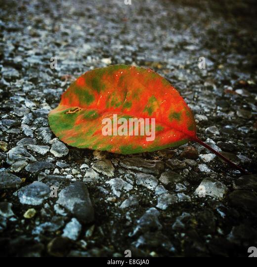 Close-up of leaf on ground - Stock Image