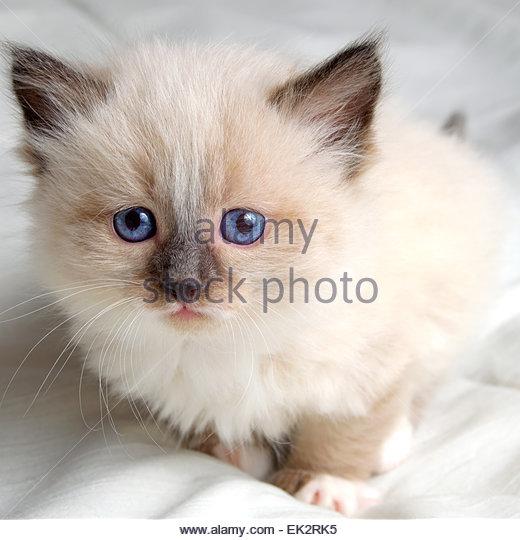cat sling carrier