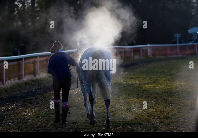 Steaming race horse after the Point-to-Point Horse racing at Cottenham in Cambridgeshire - Stock Image