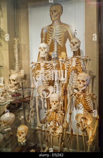 """hominids human and continuously progressive development Welcome to hominid hunting's new series """"becoming human,"""" which will  periodically examine the evolution of the major traits and behaviors."""