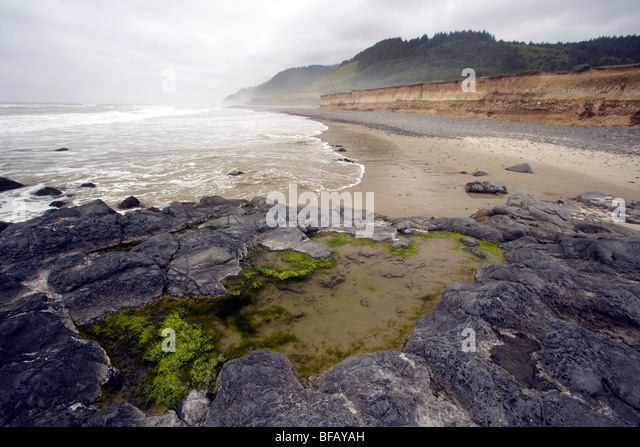 Tidal Pools at beach - Carl G. Washburne Memorial State Park - near Florence, Oregon USA - Stock Image