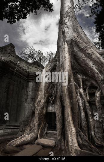 tree trunk grown on building over doorway mystical dream adventure in nature old historical shone deteriorating - Stock Image