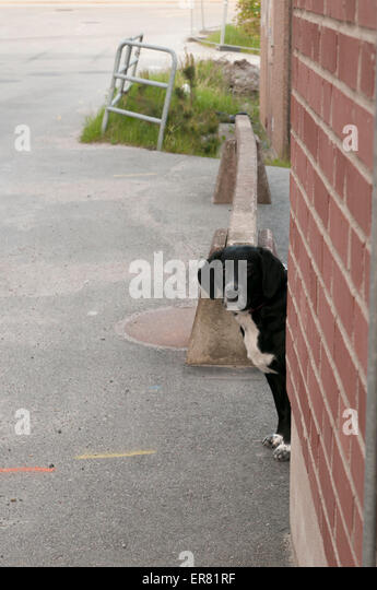 Lisa, mixed breed dog peeking out. - Stock Image