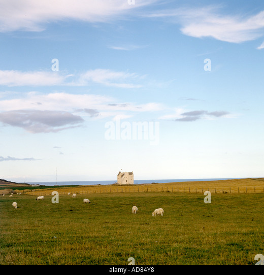 Distant view of exterior of Scottish castle with fields and sheep in the foreground. - Stock Image