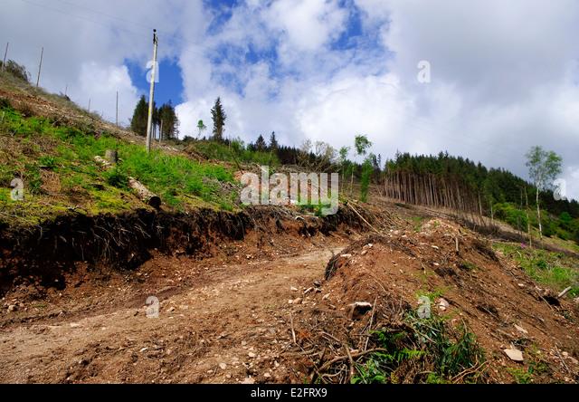 Deforestation at Ian's Wood & Raw Crag, Eskdale, Lake District, Cumbria, England, UK - Stock Image