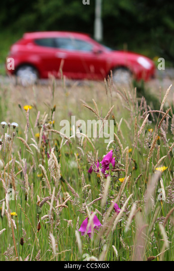 A petrol powered car driving past a meadow of wild flowers. - Stock Image