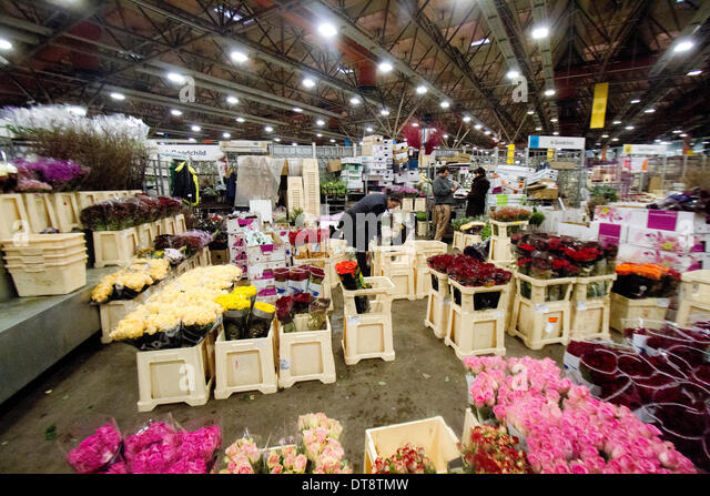 Vauxhall London, UK. 12th February 2014. A wholesale vendor works at her flower stall in New Covent Garden a few - Stock Image