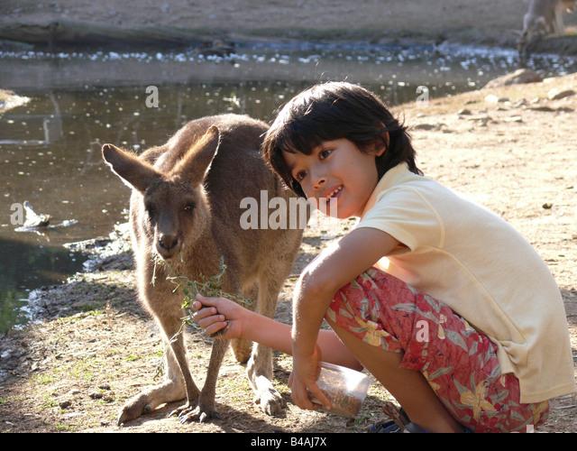 Currumbin Sanctuary, Boy And Kangaroo - Stock Image