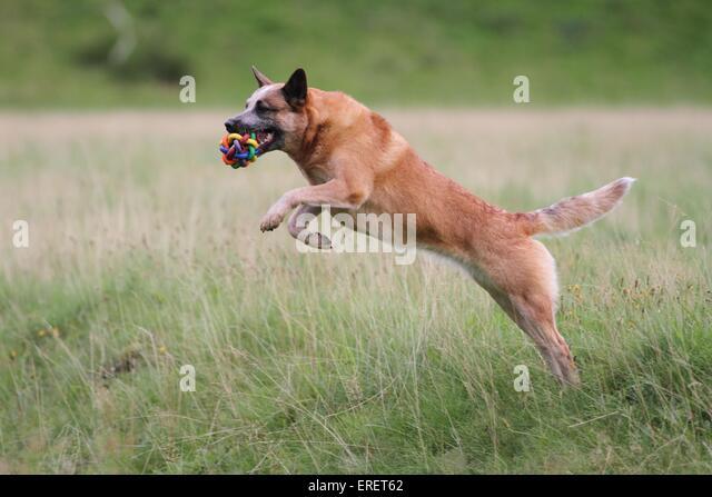 Dogs: Woof - reddit