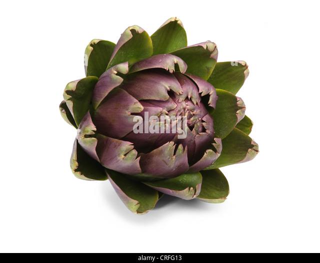 Globe artichoke on white background - Stock Image