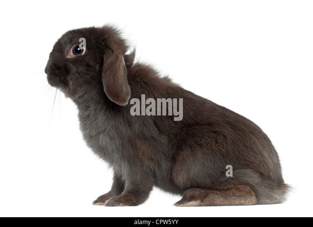 Rabbit sitting against white background - Stock Image