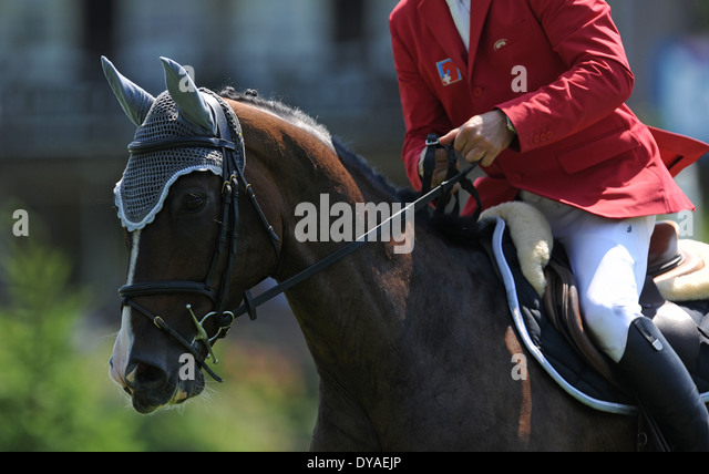 Close up of a horse and rider during a show jumping competition - Stock Image