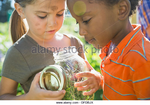 Kids looking at bugs in jar - Stock Image