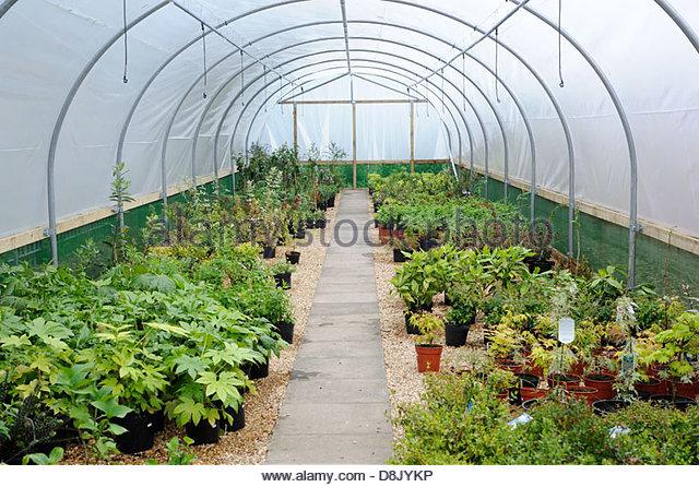 Garden Nursery. - Stock-Bilder