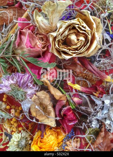 Dried flower abstract - Stock Image